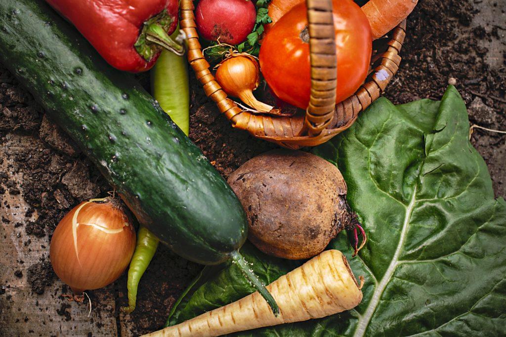 オルター野菜イメージ
